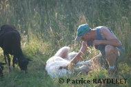 Le triptyque homme – chien – mouton - raydelet - 37
