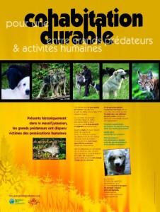 Pour une cohabitation durable entre grands prédateurs et activités humaines