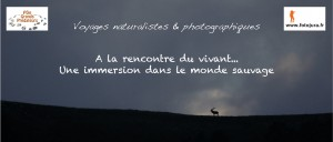 Voyages naturalistes et photographiques