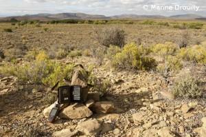 Installation d'un piège photographique dans une ferme. Il est très important d'introduire le moins possible d'éléments étrangers lors de la pose des caméras, car les animaux sauvages – et en particuliers ceux qui sont persécutés – se montrent très craintifs. Nous utilisons donc les roches de la région comme support.