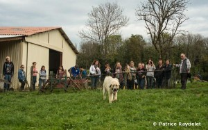 Chien et moutons red2