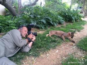 Le photographe professionnel Denis Palanque prenant des photos de Noodle, une femelle caracal apprivoisée par une famille de fermiers, prouvant que l'on peut faire de son ennemi un ami!