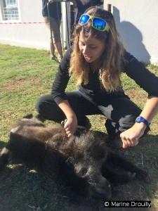 Marion Tafani prenant des mesures et des poils sur un babouin mort, pour son étude sur les conflits avec les éleveurs.